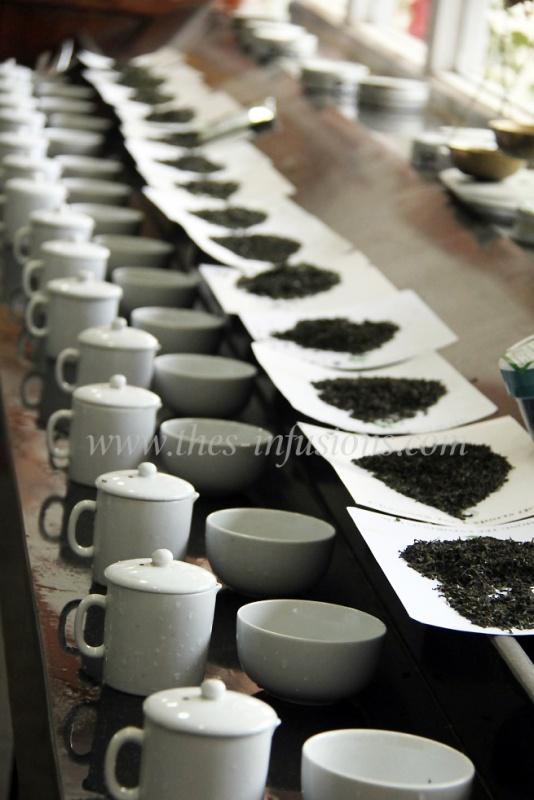 Dégustation des lots de thé primeur à Darjeeling