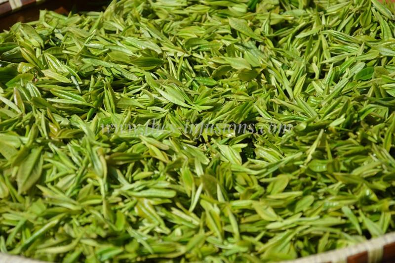 thé vert sauvage d'ANJI BIO